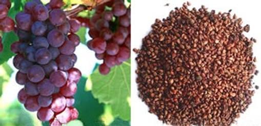 Hidratação nos cabelos com óleo de semente de uva 1