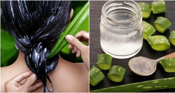 Hidratação caseira para o cabelo - Babosa