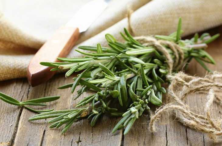 tonico-de-alecrim-para-o-cabelo-crescer-folhas